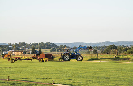 Pictured is a turf farm in Maitland, New South Wales.