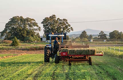 A farm tractor carries turf at a turf farm in Maitland, NSW, near Lochinvar urban release area