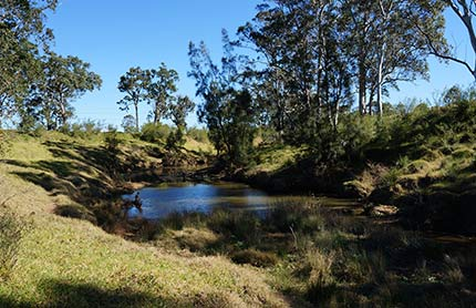 cumberland plain conservation strategy news thumbnail 430x278