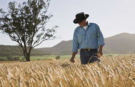 nenw-goal-1-man-in-a-wheat-field-in-narrabri-dnsw