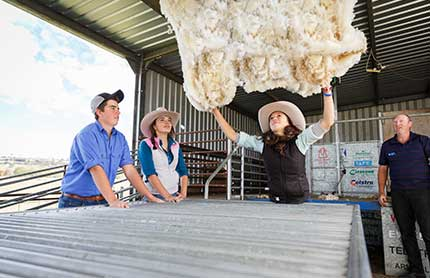 nenw-goal-1-tafe-students-with-sheep-wool