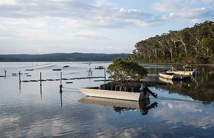 south east and tableland oyster farm 430x278